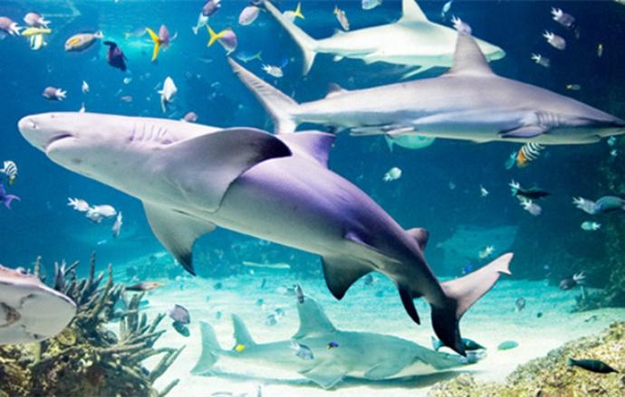 悉尼海洋生物水族馆在1988年澳大利亚建国二百周年纪念时开幕,是现今世界上最大的水族馆之一。该馆是悉尼重要的旅游景点之一,每年有逾55%的海外游客。