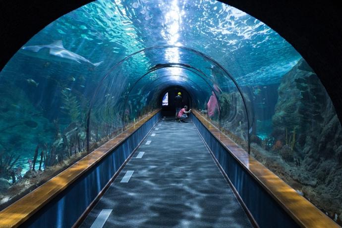 悉尼水族馆 拥有世界上种类最繁多的澳大利亚水生生物。从鲨鱼和儒艮到黄貂鱼和海马,在悉尼水族馆之旅中可以探索 14 大主题区域。您甚至可与鲨鱼共潜。