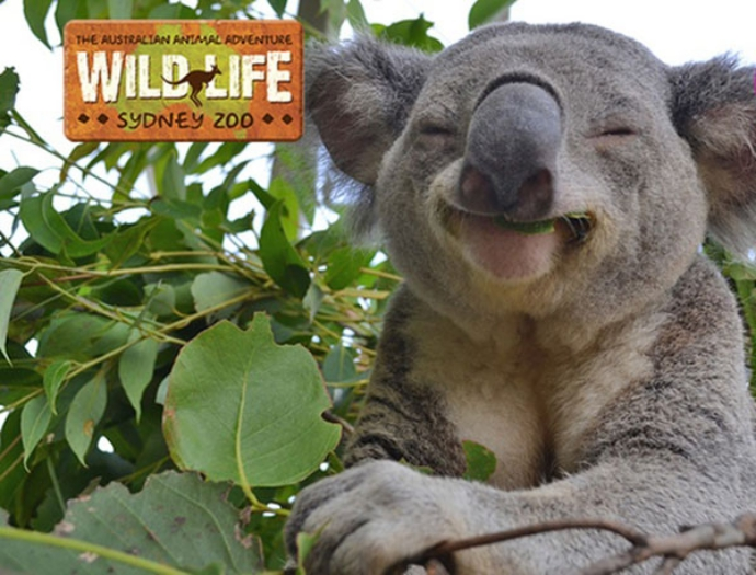 悉尼野生动物园是位于澳大利亚悉尼市中心的野生动物园。它于2006年9月正式开业,位于达令港休闲和零售区的城市一侧,毗邻SEA LIFE悉尼水族馆和悉尼杜莎夫人蜡像馆。