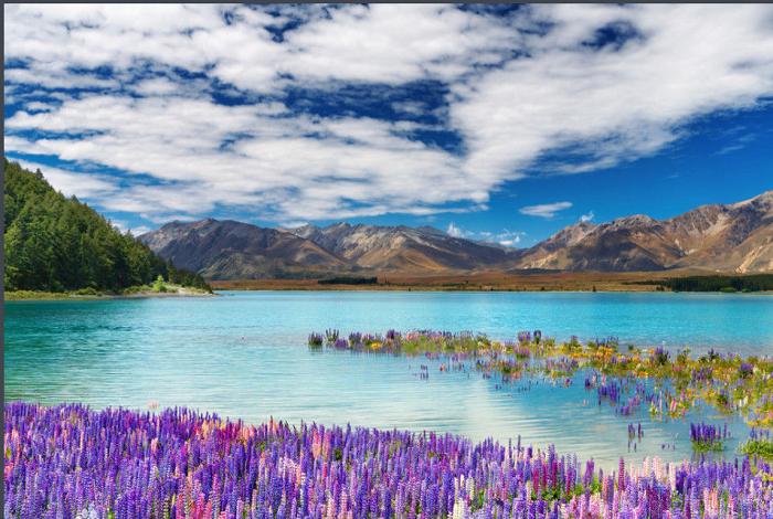 新西兰南岛蒂卡波湖1日包车游•途径水果小镇+好牧人教堂+蒂卡波湖+远眺库克山【皇后镇出发】