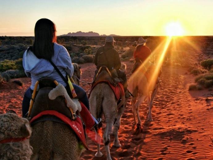 乌鲁鲁骆驼之旅以景色迷人的乌鲁鲁和卡塔丘卡世界遗产保护区为背景,提供澳大利亚国内无可匹敌的骆驼游体验。骆驼农场位于艾尔斯岩度假村,面向游客全年开放。农场拥有60只友好而勤劳的骆驼,深受游客喜爱。