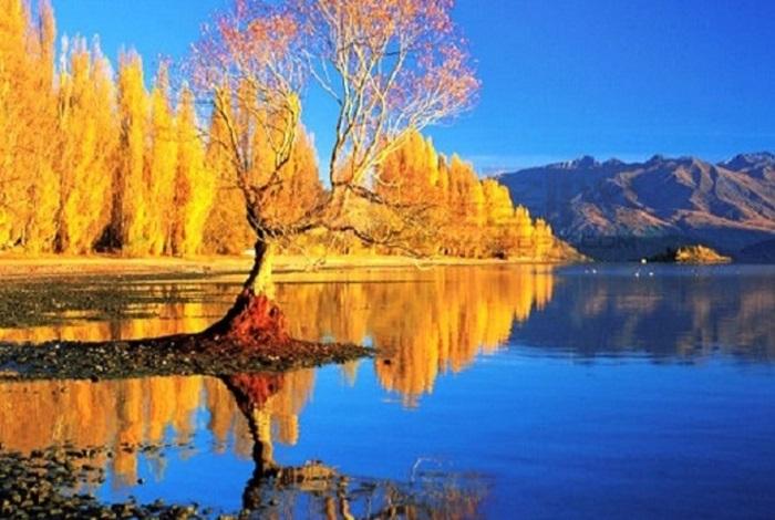 瓦纳卡被称为南岛天堂小镇。这座湖畔小镇有着悠闲缓慢的生活方式和节奏,沿湖而建的小院子有着繁花盛开的一角。一棵孤独的长在瓦纳卡湖中的树,2014年新西兰摄影师对于这颗树的拍摄,赢得了新西兰当年的最佳风景照。这棵树常常人来人往,最终成为了众所周知的网红树。