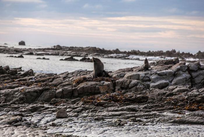 凯库拉拥有壮丽的自然环境 —— 村庄就坐落在凯库拉山脉与太平洋之间。在冬季,山上白雪覆盖,更增奇伟。邂逅海洋哺乳动物是凯库拉最独特的魅力 —— 鲸鱼、皮毛海豹和海豚长期生活在沿海水域。
