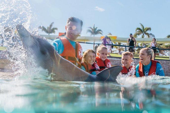 海洋世界园区内可以观赏精彩的海豚表演:这可是海洋世界的招牌项目,看这群海里的精灵在训练员的指示下,卖萌逗趣,越出水面跳一段水中华尔兹,引来观众频频拍手叫好 ; 另外您还可以付费参加喂海豚以及和海豚互动的项目 ,非常适合全家一起参与体验!