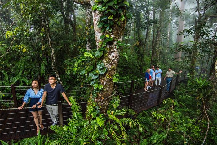 库兰达热带雨林公园位于北昆士兰省占地40公顷的一个热带雨林旅游中心,整座热带雨林被列为世界自然遗产保护的对象之一,是到凯恩斯的必游之地。