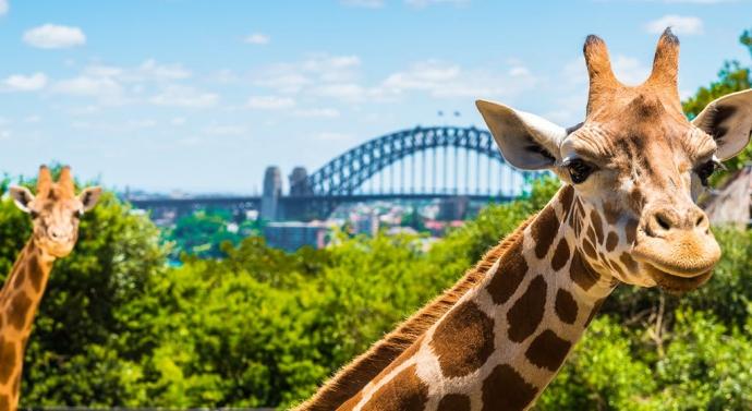 塔龙加动物园坐拥悉尼港的壮观美景,是观赏本地野生动物和稀有外来动物的绝佳目的地。动物园提供各种游览项目,包括饲养员带领的野性澳洲体验和本地野生动物 VIP 金色澳洲之旅。