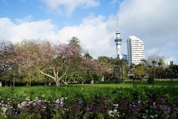 新西兰北岛奥克兰1日包车游•一树山公园+使命湾+伊甸山+北岸大桥+天空塔