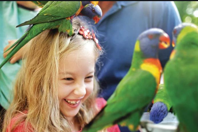 在可伦宾野生动物园,人与之然和谐相处的环境在这里得到最大限度的体验,鸟和蜥蜴悠闲的在游客身边漫步,每个人都不忍心打扰这个宁静的小生态环境。动物园面积很大,内有小火车供游客搭乘游览。除了远距离欣赏,游客还可以亲手喂袋鼠等动物,并和考拉合影,喂食彩虹鹦鹉作为区内特色表演也深受游客们喜爱;