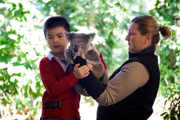 来到澳大利亚,怎么能不抱抱可爱的考拉,可伦宾野生动物园拥有超过50只考拉,它也是昆士兰州为数不多的可以抱考拉的几个景点之一。