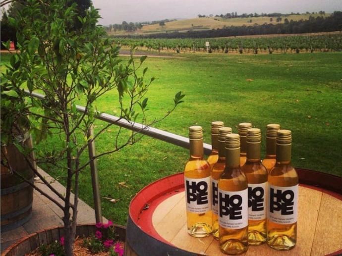 你还可以看到希望酒庄酿酒的一大特色:从种植到装瓶,葡萄酒都是在庄园内完成的。