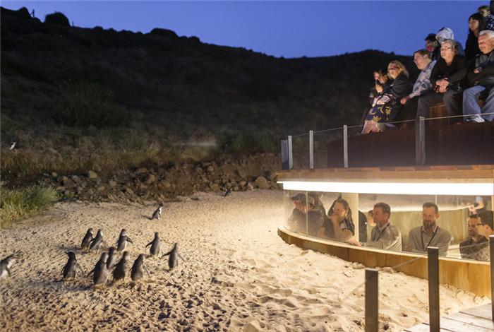 澳大利亚墨尔本市区+企鹅岛旅游1日包车游·国会大厦+圣派翠克大教堂+费兹洛花园+菲利浦岛+企鹅归巢【亲子首选】