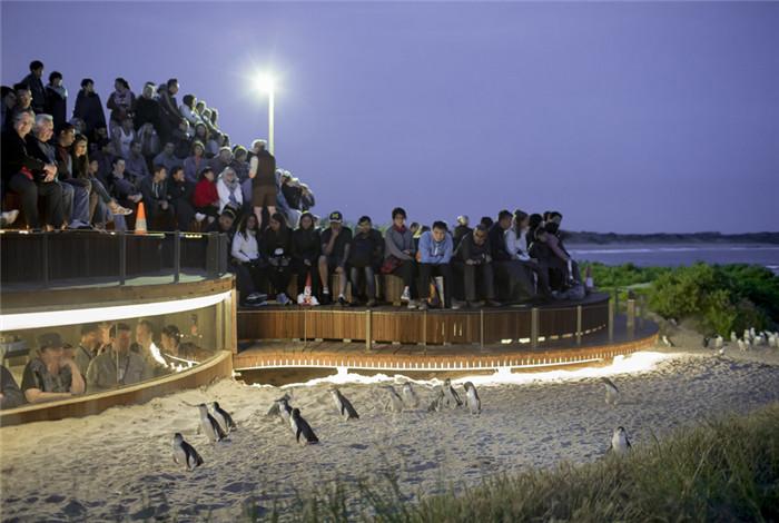 升级版平台不仅为游客们提供了最壮观的海景,而且还是观看企鹅归巢的最佳位置。