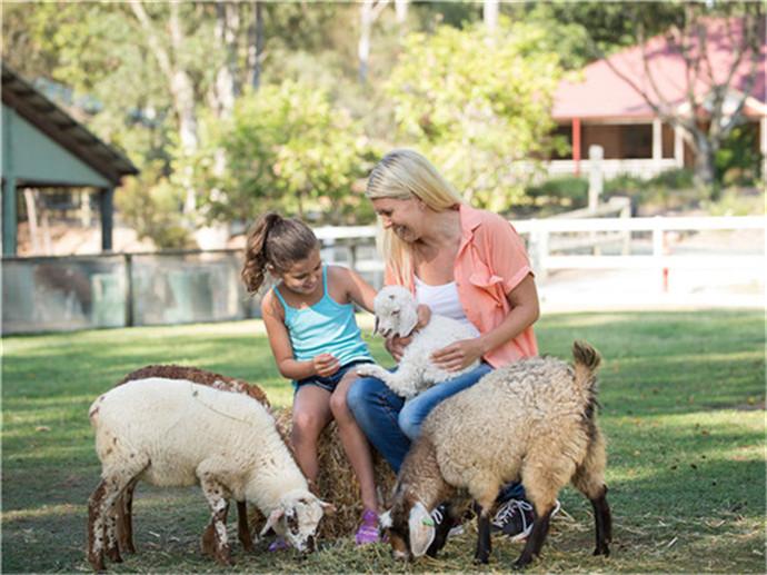 天堂农庄(Paradise Country Farm),是澳大利亚著名的主题公园之城黄金海岸的一个主题农庄,这个农庄占地12公顷,是一处集农场、牧场、动物表演为一体的著名游玩之地,在这里,您不仅可以看到可爱的动物,拥抱萌萌哒的考拉,还可以品尝到美味的澳式烧烤。