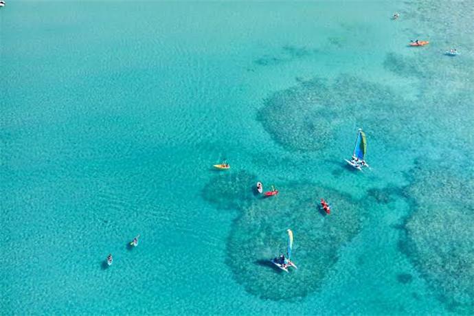 澳大利亚汉密尔顿岛1日游·【汉密尔顿岛旅游】探索号巴士+白日梦岛+猫眼海滩+哈密尔顿岛野生动物园