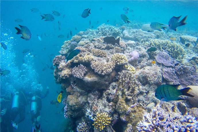 哈迪大堡礁(Hardy Reef)是珊瑚礁世界(Reefworld)浮船的集中地,您将乘坐豪华双体游船,沿途欣赏圣灵群岛以及波澜壮阔的海洋美景, 船行2小时抵达哈迪大堡礁海上平台,您可以在这里自由浮潜 ,搭乘玻璃底船,或自费乘坐直升飞机 ,全方位欣赏大堡礁之美!