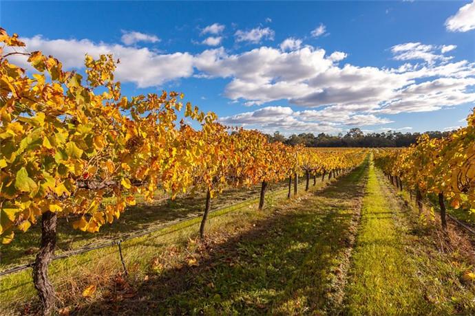 澳大利亚西澳珀斯天鹅河谷包车一日游-,国王花园,天鹅河谷美食美酒,蜂蜜工厂,凯维森野生动物园