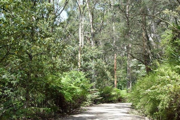 澳大利亚墨尔本威尔逊岬公园步道一日游