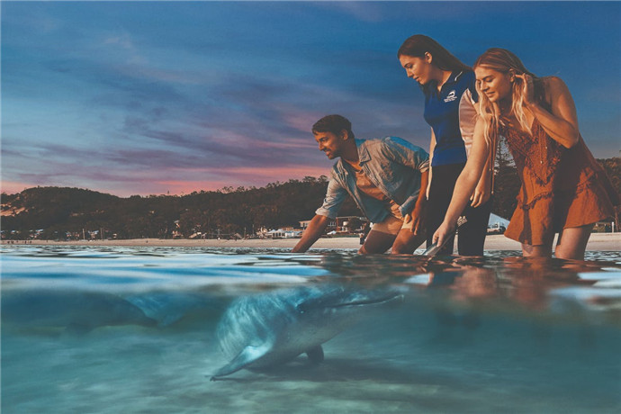 海豚岛最著名的是那群几十年来,每天跑来混吃混喝的野生海豚;每天傍晚,这群小家伙们就会习惯行地游到码头的岸边,等待游人们喂食,三百六十五天风雨无阻,有时来的早了喂食还没开始,它们会很安静的在边上或嬉戏或安静的耐心等待着到了喂食时间,管理员会要求游客排队依次下水,可以体验亲手喂食野生海豚;