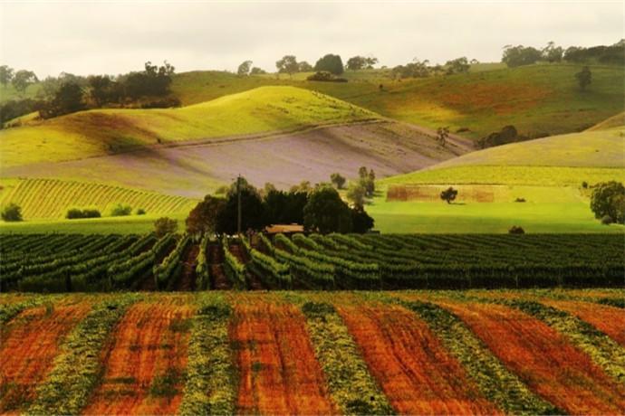 夏天时的芭萝莎谷像一幅郁郁葱葱的水墨画,而到了深秋季节则变成了金红色的油画。每年的一、二月是芭萝莎河谷当地的节日,游客们如果有幸这个时间来访,可以参加很多当地的娱乐活动。