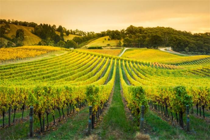 芭萝莎谷,是南澳大利亚州首要的葡萄酒产区,出产几乎整个澳大利亚约四分之一的葡萄酒,与新南威尔士州的猎人谷和维多利亚州的亚拉河谷一起被并称为澳洲的三大葡萄酒河谷而享誉世界。