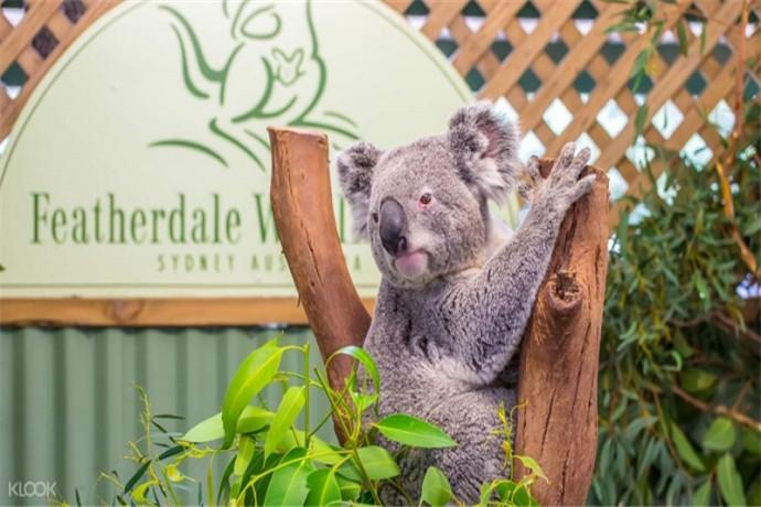费瑟黛尔野生动物园 (Featherdale Wildlife Park) 位于悉尼西部,适合在前往列入世界遗产目录的蓝山前作为中途景点游玩一天,在那里,您可以搂抱考拉并亲手喂养袋鼠。