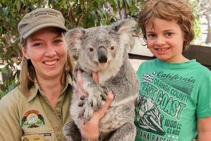 既然叫考拉动物园,自然是以展示考拉为主,园内一共拥有约130只可爱的考拉。而且整个园区内的环境相当出色,游人也将这里视为亲近大自然的理想去处。
