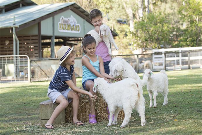 天堂农庄提供各种体验活动:可以喂食友善袋鼠、造访考拉村,并且还有机会跟惹人喜爱的考拉合照;园内还有各种丰富多彩的农场秀:剪羊毛,骑马、牧羊犬表演,在这里你所体验的是真实的澳大利亚农场生活。