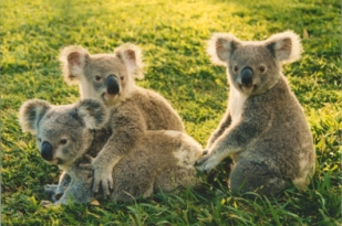 澳大利亚八日游-澳洲自助游,布里斯班看房,黄金海岸看房,悉尼看房,悉尼歌剧院(看房考察团)