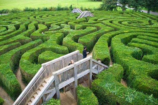 墨尔本雅思迷宫与薰衣草花园 (Ashcombe Maze & Lavender Gardens)