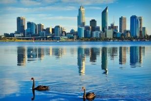 澳大利亚西澳珀斯天鹅河谷,一日游-,国王花园,天鹅河谷美食美酒,蜂蜜工厂,凯维森野生动物园
