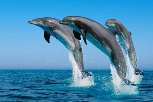 悉尼杰维斯湾海豚探险 (Jervis Bay Dolphin Cruise)