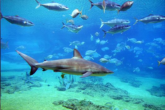 珀斯鲨鱼岛 (Shark Bay, Western Australia)
