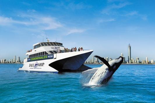 悉尼杰维斯湾鲸探险(Jervis Bay Whale Cruise)