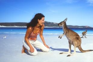 澳大利亚阿德莱德二日游-阿德莱德旅游,袋鼠岛,海豹保育公园,神奇岩石,旗舰拱门,薰衣草农庄
