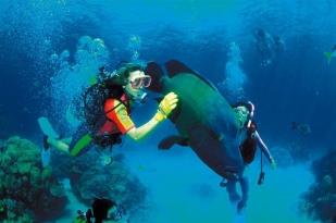 澳大利亚艾尔利滩1日游·【艾尔利海滩经典线路】+雪松溪瀑布+丁狗+海滩