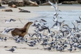 澳大利亚阿德莱德,墨尔本,塔斯马尼亚7日游-袋鼠岛,企鹅岛,萨拉曼卡广场,亚瑟港