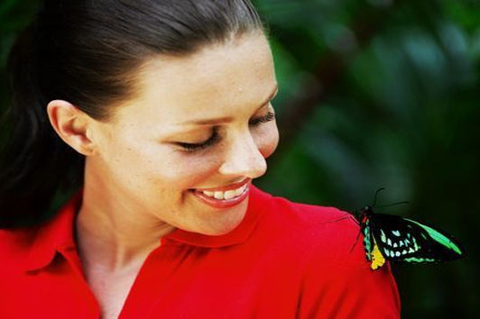 凯恩斯澳大利亚蝴蝶园( Australian Butterfly Sanctuary)
