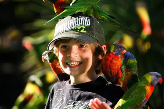 黄金海岸可伦宾野生动物园+捕蟹之旅