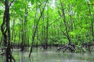 澳大利亚凯恩斯旅游包车一日游-市容3小时游-热带植物基地-弗莱克植物园-人工泻湖