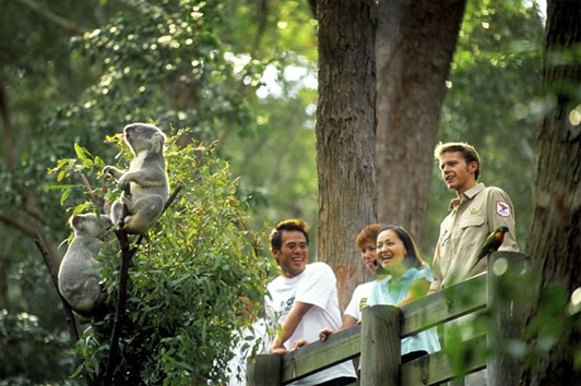 黄金海岸可伦宾野生动物园,抱考拉拍照,喂食五彩鹦鹉-澳洲旅游推荐景点
