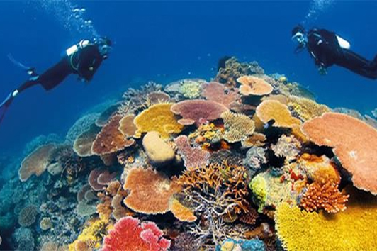 诺曼大堡礁之旅 (Great Barrier Reef Cruise)