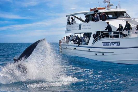 黄金海岸鲸鱼天堂 (Whales in Paradise)