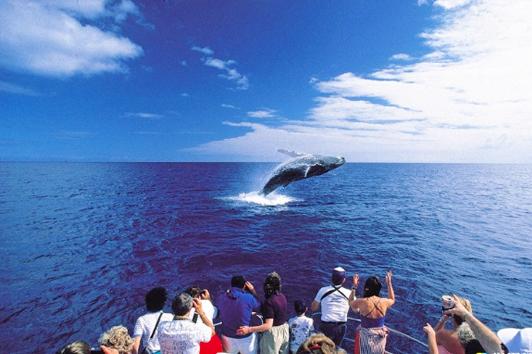 黄金海岸斯托布克岛观鲸之旅  (Stradbroke Island Whale Watching)