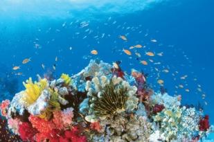 凯恩斯自助游-绿岛大堡礁上天入海一日游(40分钟观光飞行+火箭号出海)