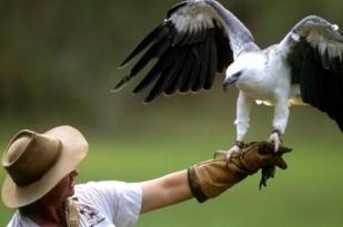 澳大利亚达尔文旅游1日游·达尔文野生动物园