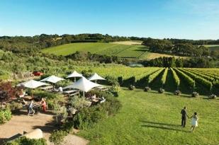 澳大利亚墨尔本一日游-墨尔本旅游,丹顿农山脉郁金香花展,Elmswood Estate 酒庄