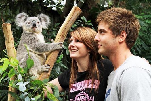 悉尼蓝山野生动物园(Wild Life Park)