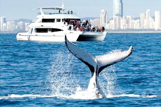 悉尼Totally Wild号快艇观鲸(Whale Watching)