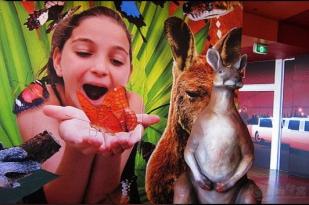 澳大利亚悉尼+墨尔本+黄金海岸+凯恩斯11天10晚景经典游-悉尼歌剧院+人气海滩+淘金小镇+最美海岸线+十二门徒+企鹅岛+大堡礁+热带雨林