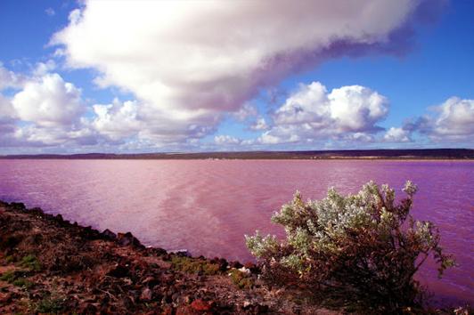 珀斯粉红湖(PINK LAKE)